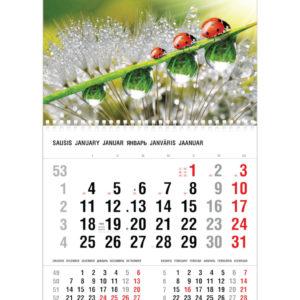 Vienos dalies sieninis kalendorius BORUŽĖS